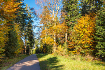 Autumn landscape - Black Forest. A small road in the mountains of the Black Forest with many firs.