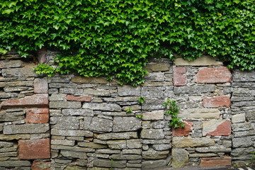 Weathered stone wall with ivy growing on top