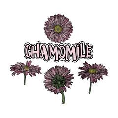 Chamomile floral vector illustration set.