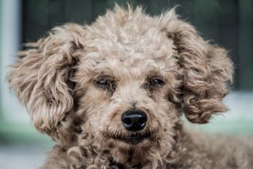dog with dramatic tone