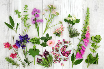 Herb and flower selection used in natural alternative herbal medicine on rustic wood background. Top view.