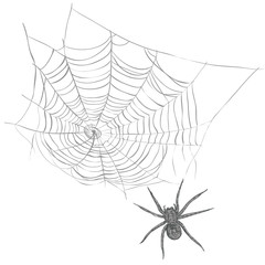 A spider weaves a spider web. Spider and cobweb vector illustration
