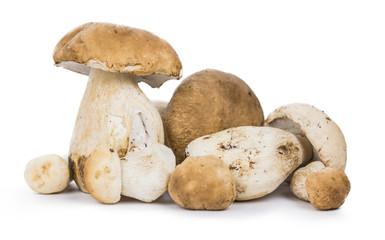 Porcinis (raw) isolated on white background