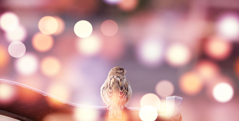 Sparrow in the city lights, autumn background