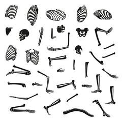 Human skeleton set. Vector