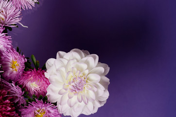 Creative background with chrysanthemum and dahlia flowers. Floral border flat lay concept