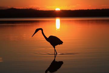Lake Weyba Heron Queensland Australia