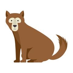 wild bear kodiak icon