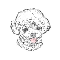 Cute poodle. Vector illustration. Fashion & Style. Beautiful dog.