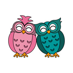 owls lovebirds romance icon image vector illustration design
