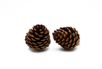 Isolated pine cone on white background
