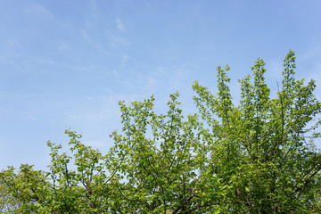 tender green and sky