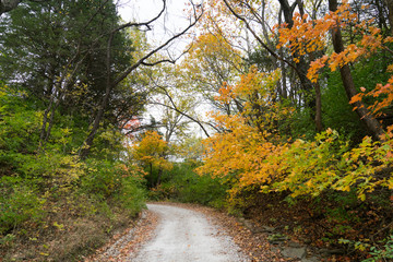Gravel road with fall leaves and trees