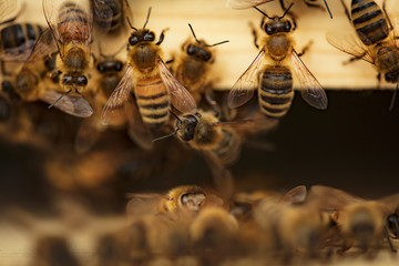 Photo on textile frame Bee Bees