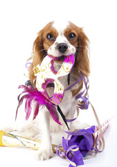 Happy new year! Illustrate your work with king charles spaniel New year illustration. Dog celebrate New year's eve with sylvester trumpet and mask..
