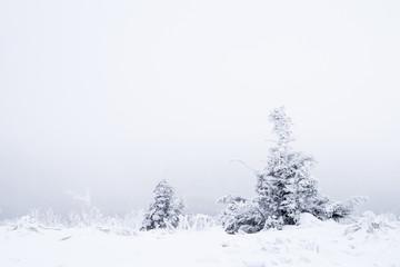 Trees at winter
