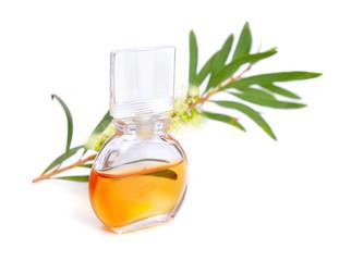 Melaleluca (tea tree) essential oil with twig and flowers.