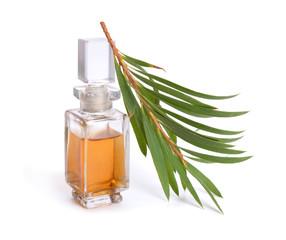 Melaleluca (tea tree) essential oil with twig.