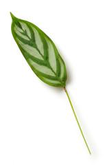 Wall Mural - green tropical leaf