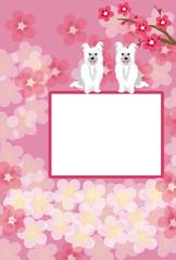 可愛い白い犬と梅の花のイラストのピンクの写真フレームのポストカード