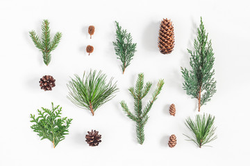 Christmas composition. Different winter plants on white background. Christmas, winter, new year concept. Flat lay, top view