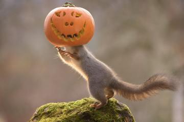 squirrel inside a pumpkin