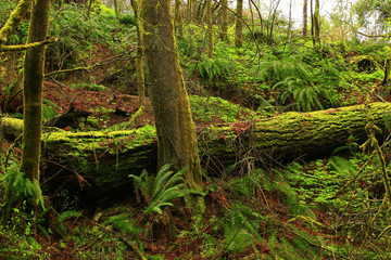 a picture of an Pacific Northwest forest in winter