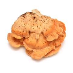 Laetiporus sulphureus mushroom
