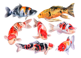 The koi carps isolated on white background. Fish. Watercolor. Illustration. Picture. Template