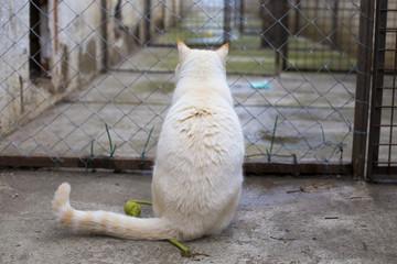 Gato blanco y amarillo en protectora animal