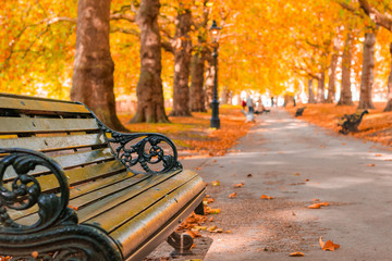 Aluminium Prints Autumn Autumn concept, benches on an avenue lined with trees in Green Park of London