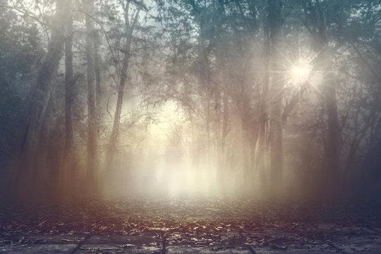 Calmness misty spooky woods with warm light background