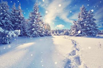 Fußspuren im Schnee im Winterwald