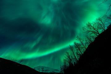 Amazing Aurora Borealis in North Norway above trees, above Tromsdalstinden mountain, Tromso City,