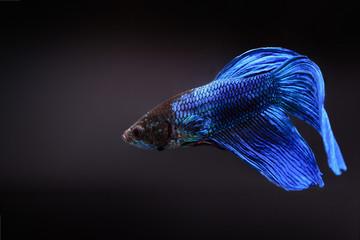 Beautiful aquarium fish
