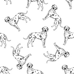 Seamless pattern of hand drawn sketch style dalmatian. Vector illustration isolated on white background.
