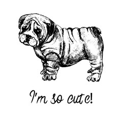 Hand drawn sketch style english bulldog puppy. Vector illustration isolated on white background.