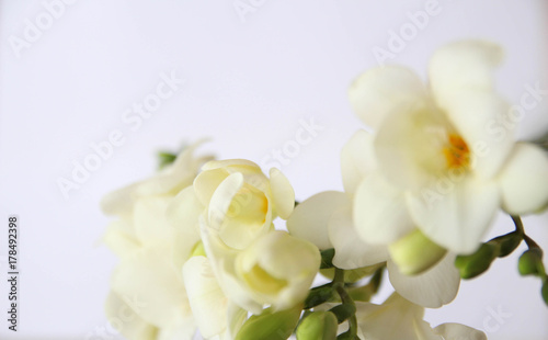 White Freesia Flowers Bouquet Stock Photo And Royalty Free Images