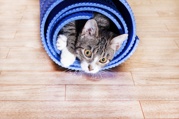 The kitten lies in a wrapped blue mat for yoga