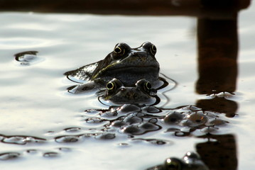Frogs, mum, dad and the kids