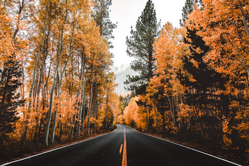 Orange And Yellow Autumn Road Landscape