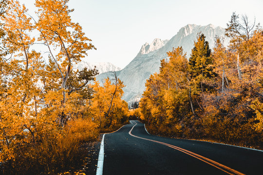 View of windy fall road landscape