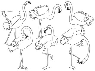 Vector Set of Beautiful Elegant Flamingos. Vector Flamingo