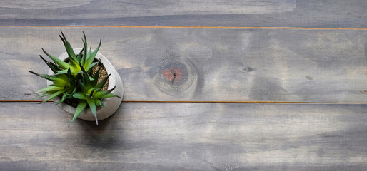 Succulent plant on gray vintage wooden background, copy space for text and product display montage, top view, flat lay