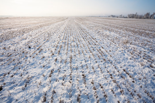 Winter field covered with snow