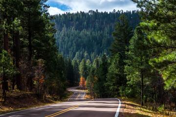 Road to Hawley Lake Arizona