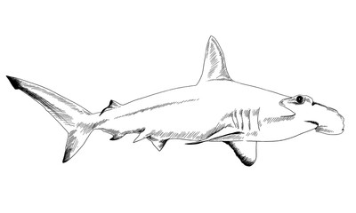 a shark drawn in ink on a white background with jaws attacking