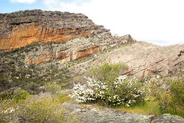 Australian Mountain Landscape with Flowers