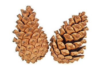 Two brown pine cones over white background