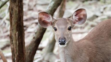 close up head of deer